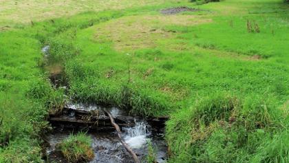 Bachlauf an der Steinkaulsmühle