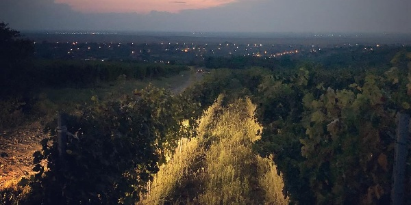 Seara în via Aramic