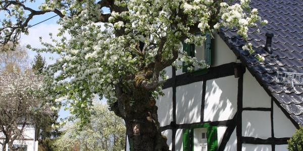 Fachwerkhaus in Pomster