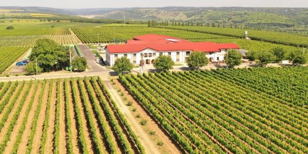 Panciu Winery & Resort
