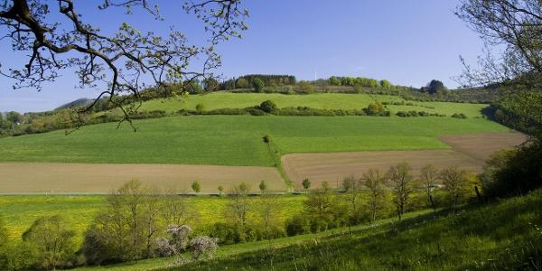 NSG bei Wenholthausen