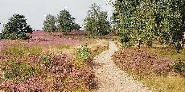 Pfad durch Heideflächen