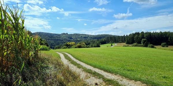 Wanderweg von Hellberg nach Högen  - Im Hintergrund Ruine Lichtenegg