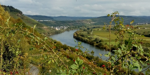 "Moselblick vom Wanderweg ""Kestener Schweiz"""