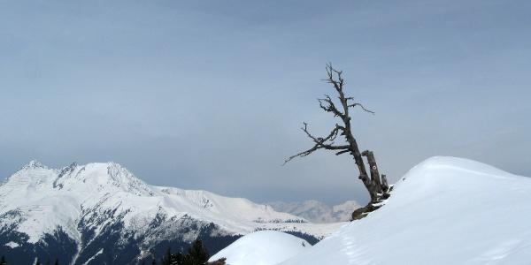 Wer kennt diesen Baum nicht ? - Schon fast ein Symbol für Salfains