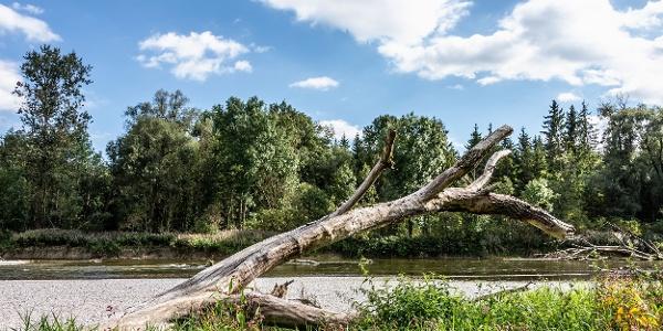 Ursprüngliche Landschaft im Naturschutzgebiet Isarauen