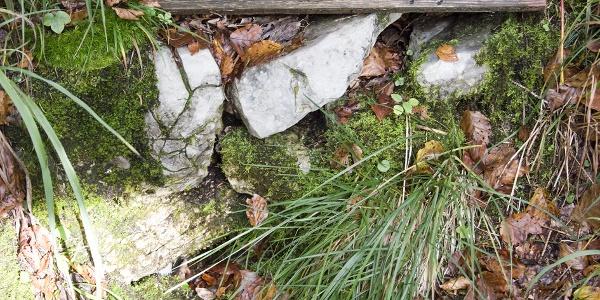 Beim Abstieg kommt man am Gießenbachwasserl an einer Quelle vorbei.