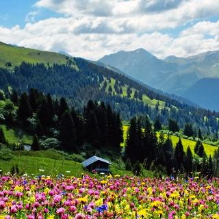 Herrliche Blumenwiese im Schanfigg