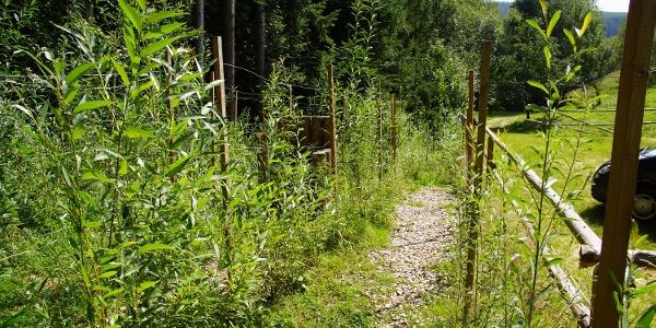Weidenlabyrinth