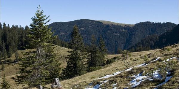 Von den Wiesenhängen bei der Moosenalm sieht man gut zum Kotzen hinüber, einem einsamen Bergwanderziel.