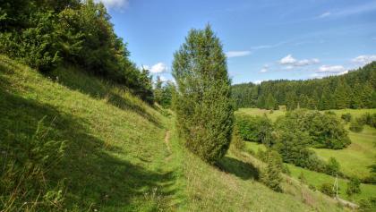 Hangweg oberhalb der Eschach