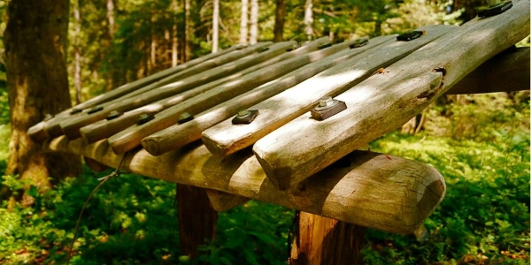 The forest xylophone - how does wood sound?