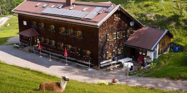 Sommerfrische für viele Tiere sind die Almwiesen rund um die Neue Magdeburger Hütte