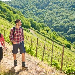 Am Lahnwanderweg in den Weinbergen bei Obernhof