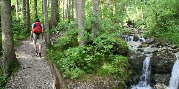 Wenige Minuten nach dem Start führt die Wanderung genussreich entlang eines Baches und durch einen schattenspendenden Wald.