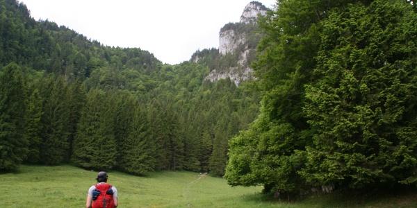 Über das Feld und anschließend durch den Mischwald führt der Steig zum Sattel.