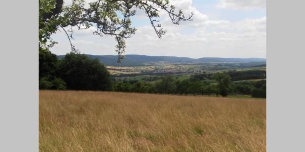 Blick vom Waldrand in Eichelsbach