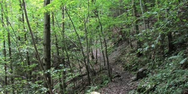 Auf Waldwegen geht's hinauf zur Höhle