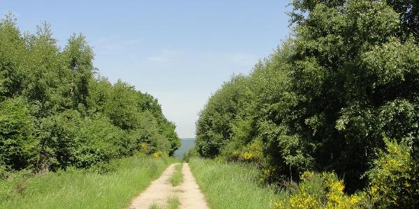 GPS-Tour von Kall nach Gemünd_Von Anstois in den Olefer Kirchenwald