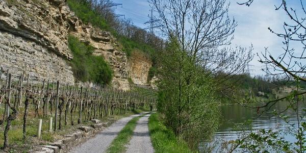 Prallhang am Neckar
