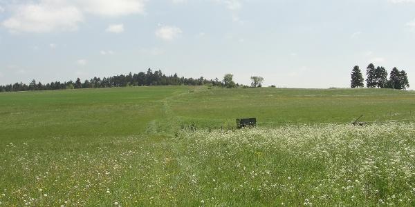 Landschaft vor Erreichen des Kammerwaldes