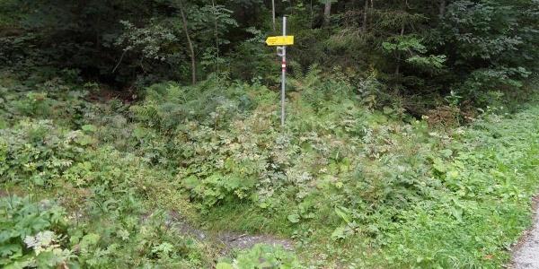 Wegweiser zur Abkürzung durch den Wald