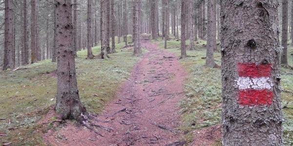 Waldweg zur Murauer Hütte