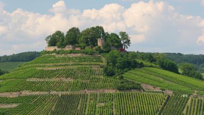 Wein- und Rosenrundweg an der Burgruine Weibertreu