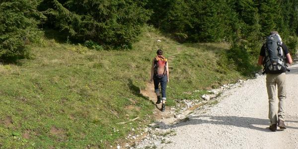 Auf der anderen Seite der Forststraße führt der Wanderweg weiter