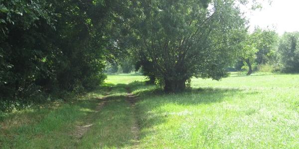 Weg nahe Zweimen (Aug. 2013)