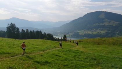 Blick auf den Alpsee