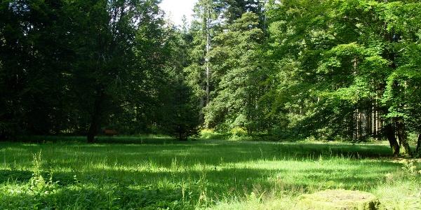 Die idyllische Waldliegewiese bei Freudenstadt