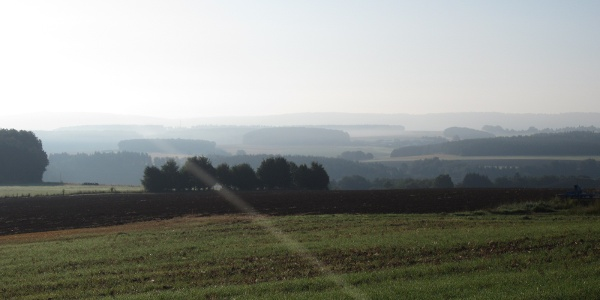 Morgennebel (Aug. 2013)