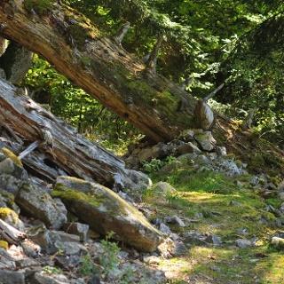 Bannwald Schwarzahalde