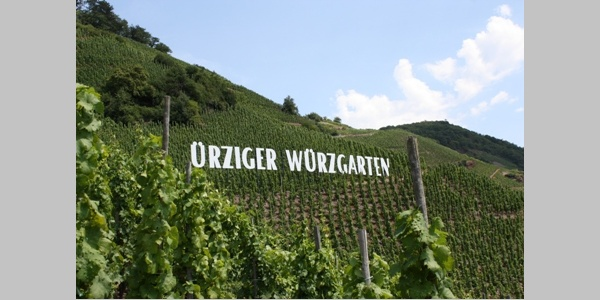 """""""Ürziger Würzgarten"""" high above the Moselle river"""