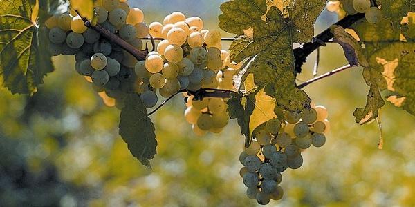Saechsische Vinothek