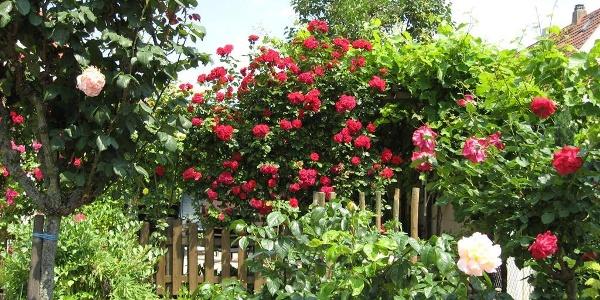 Südländischer Früchtegarten Juni08Foto Havekost03