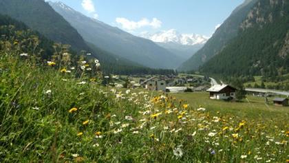 Along the Dorfwaldweg (Village Forest Path) in Randa