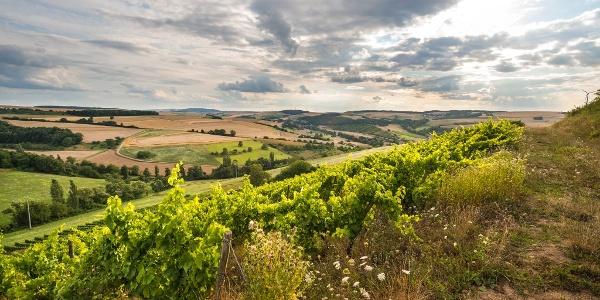 Ausblick über die Hügellandschaft