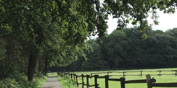 Pferdekoppel am Wanderweg