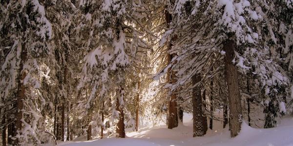 Winterwonderland im Aufstieg