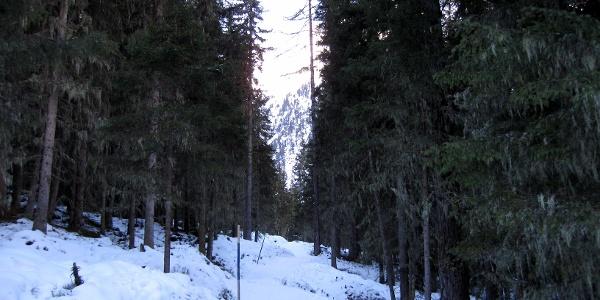 Waldweglein zur Alm