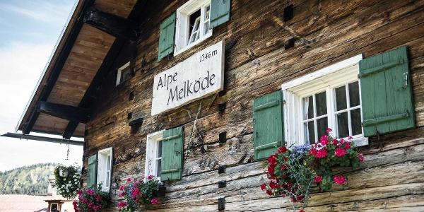 Alpe Melköde Sommer