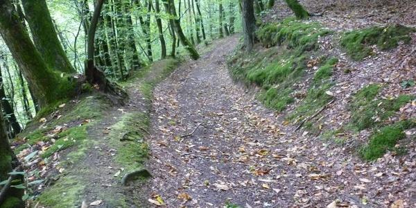 Waldweg oberhalb des Sirzenicher Baches