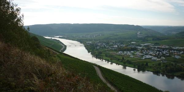 Aussicht beim Aufstieg von Schweich Richtung Mehringer Berg moselaufwärts. Rechts Longuich und im Hintergrund Riol.