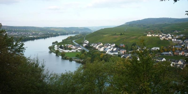 Blik vanaf de dorpsrand van Mehring stroomopwaarts richting Riol en Longuich