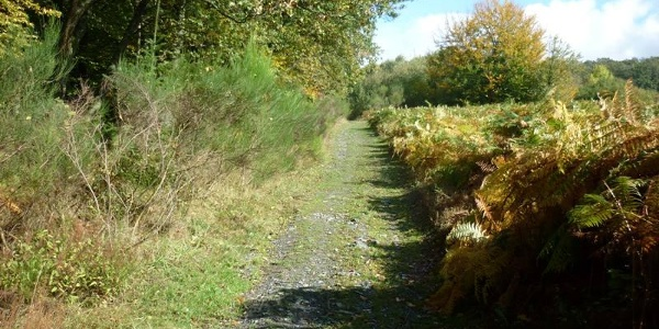 """Forest path looking towards the viewing platform with views of the """"Five Moselle lakes"""""""