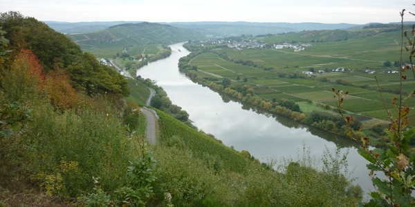 Blick flussabwärts aus den Kestener Weinbergen Richtung Brauneberg. Links am Hang einige Häuser von Kesten