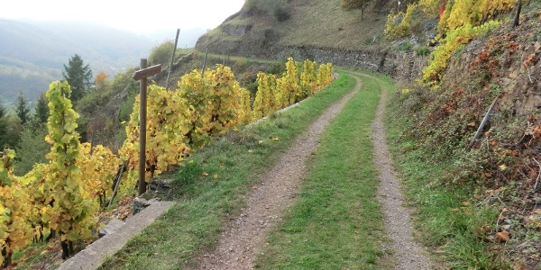 Path leading through the vineyards above Valwig
