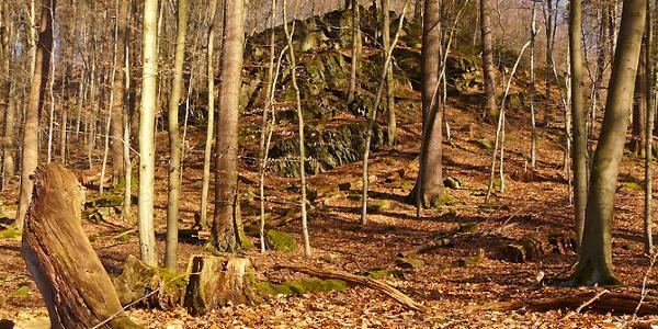 Schroffe Kegel schimmern zwischen den Bäumen hindurch